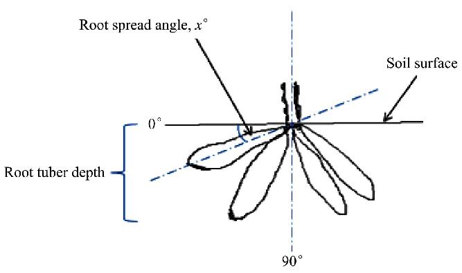 Root orientation measurement • Drudgery measurements Polar