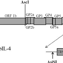 (PDF) Rescue and evaluation of a recombinant PRRSV