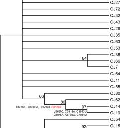 phylogenetic relationships among homalodisca coagulata virus 1 download scientific diagram [ 850 x 1352 Pixel ]