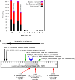 nucleotide sequence polymorphism of the orf1 c2 helicase region within homalodisca coagulata virus 1  [ 850 x 942 Pixel ]