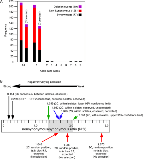 small resolution of nucleotide sequence polymorphism of the orf1 c2 helicase region within homalodisca coagulata virus 1