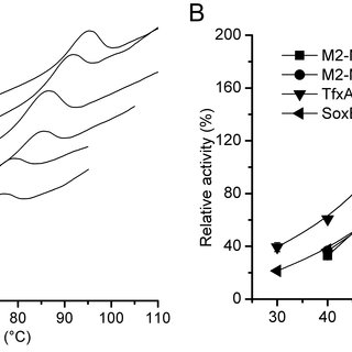 Comparison of the thermostabilities of SoxB, TfxA and