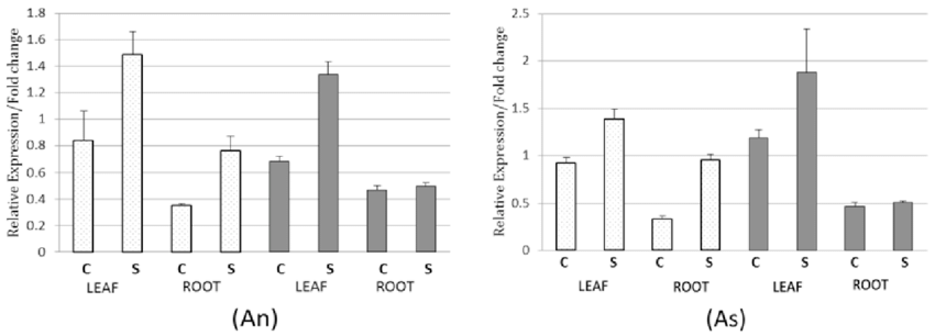 Relative expression levels of CMO and BADH genes in