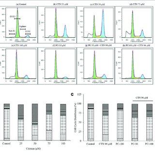 Measurement of NQO1 activity in HepG2 cells. Data are