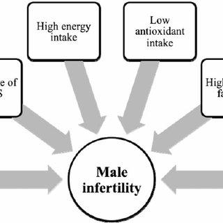 (PDF) Nutritional modifications in male infertility: A