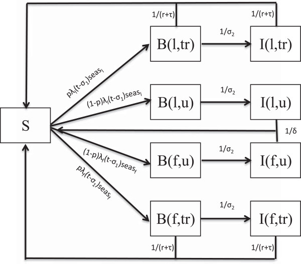 Model flowchart. Flowchart underlying the population level