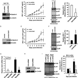 Endogenous Galectin-3 enhances HIV-1 virus release. (A