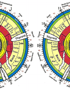 The iridology chart for both right and left irises also download rh researchgate