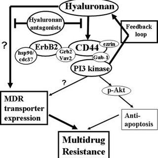 Hyaluronan-mediated effects on drug resistance