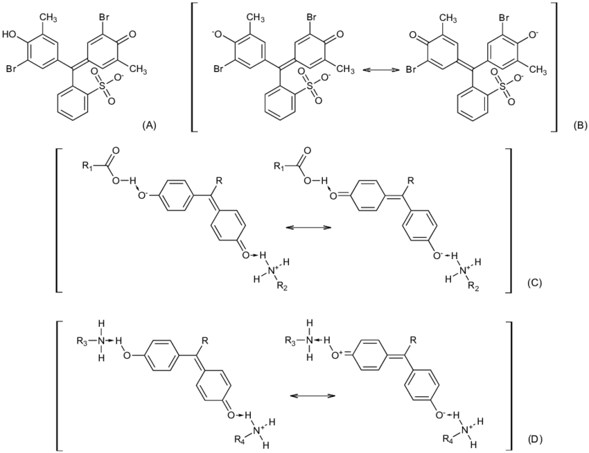 Predominant chemical structures of BCP in aqueous solution
