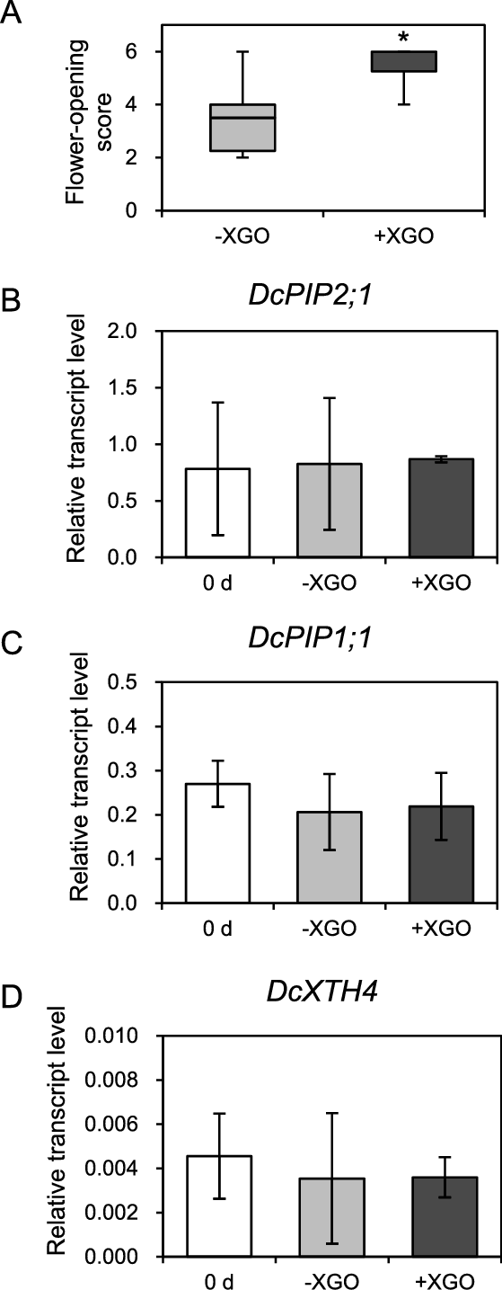 medium resolution of gene expression analysis in xgo treated flowers of the pure red carnation a flowers at os 2 were treated with xgo or without xgo 1 xgo solution