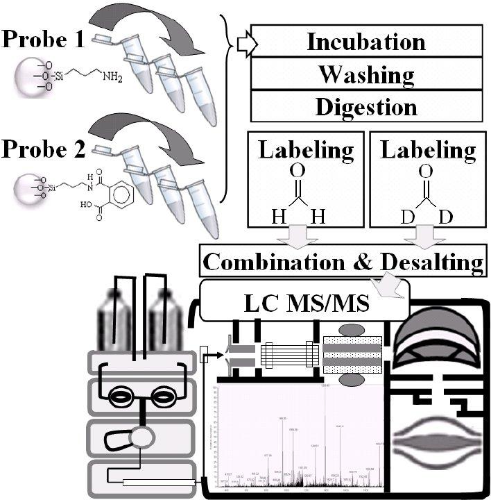 Flow chart and sample pretreatment for quantitative