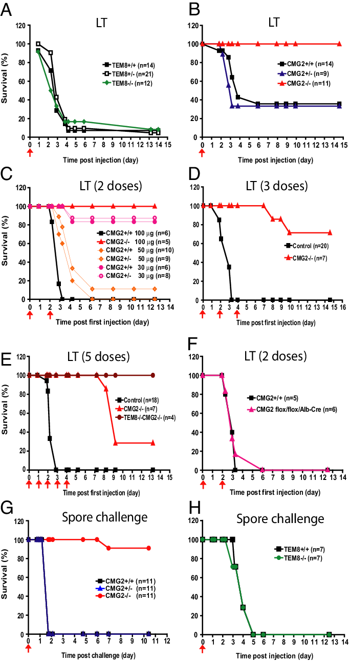 hight resolution of cmg2 is the major anthrax toxin receptor in vivo a susceptibility of tem8