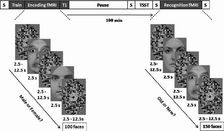 Schematic illustration of the recognition memory task and