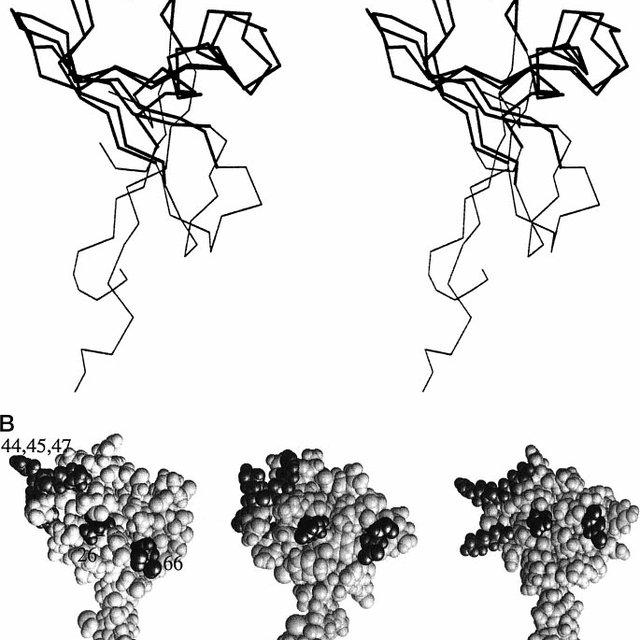 Adenovirus infection of A549, KU812, HMC-1, and U937 cells