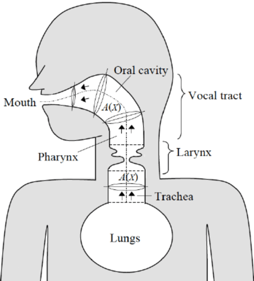 small resolution of schematic of the airway model a frontal section is shown for the larynx while