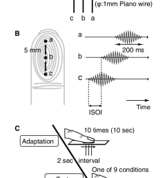 b time chart c experimental procedure [ 714 x 1217 Pixel ]