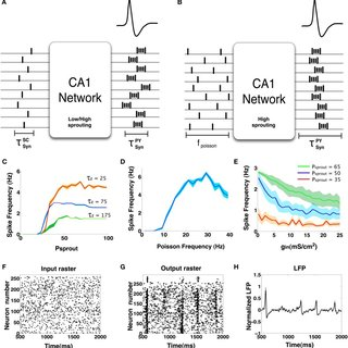 (PDF) Genesis of interictal spikes in the CA1: A