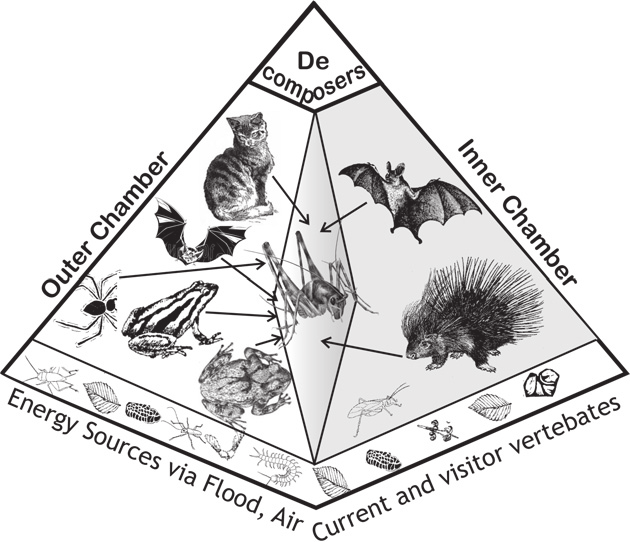 -Ecological food pyramid, possibly operating inside the