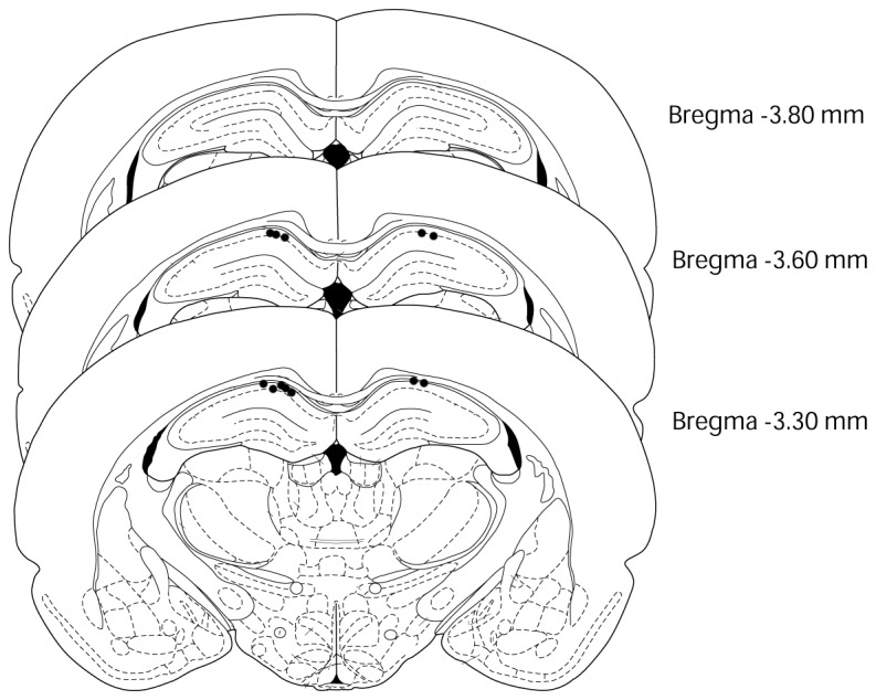 """This figure was modified from """"the rat brain in"""