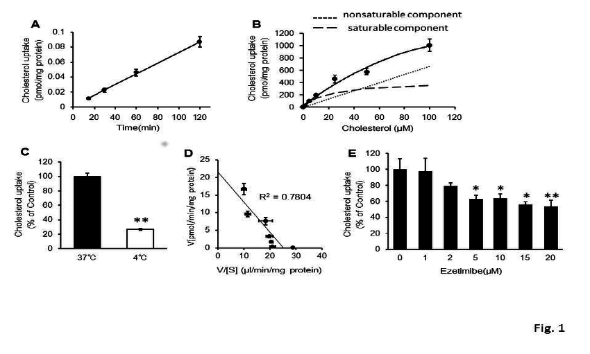 Mechanism of cholesterol uptake by Caco-2 cells (A–D): A