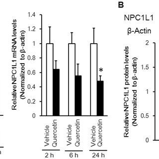 Effects of 100 µM luteolin and quercetin on NPC1L1 mRNA (A