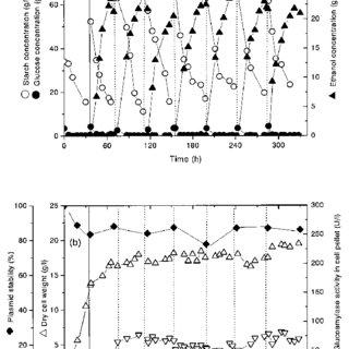 Batch fermentation of starch to ethanol by YF207/pGA11