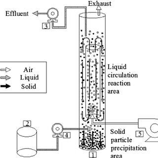 Schematic diagram of the internal airlift loop reactor