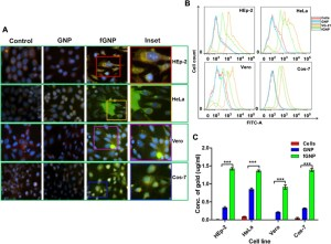 Cellular uptake of nanoparticles by HEp2, HeLa, Vero and