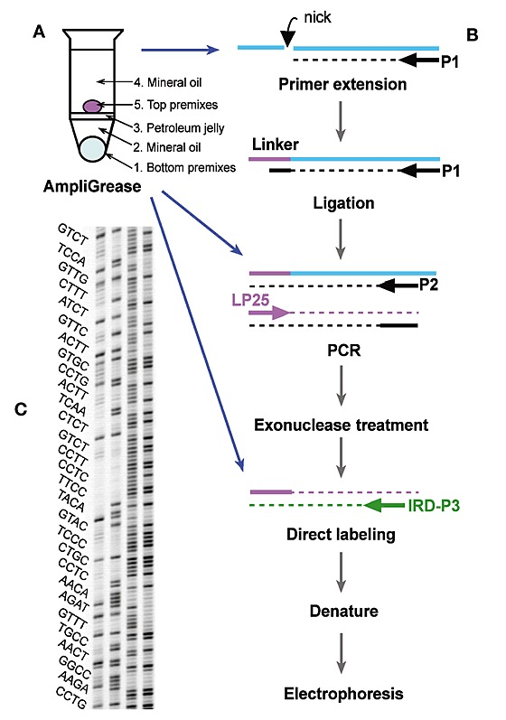 Flowchart of automated LM-PCR.(A) Automated AmpliGrease
