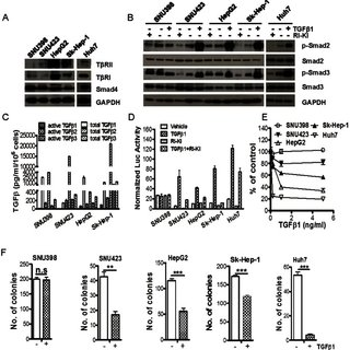 (A) Immunoblotting analysis for Smad proteins and