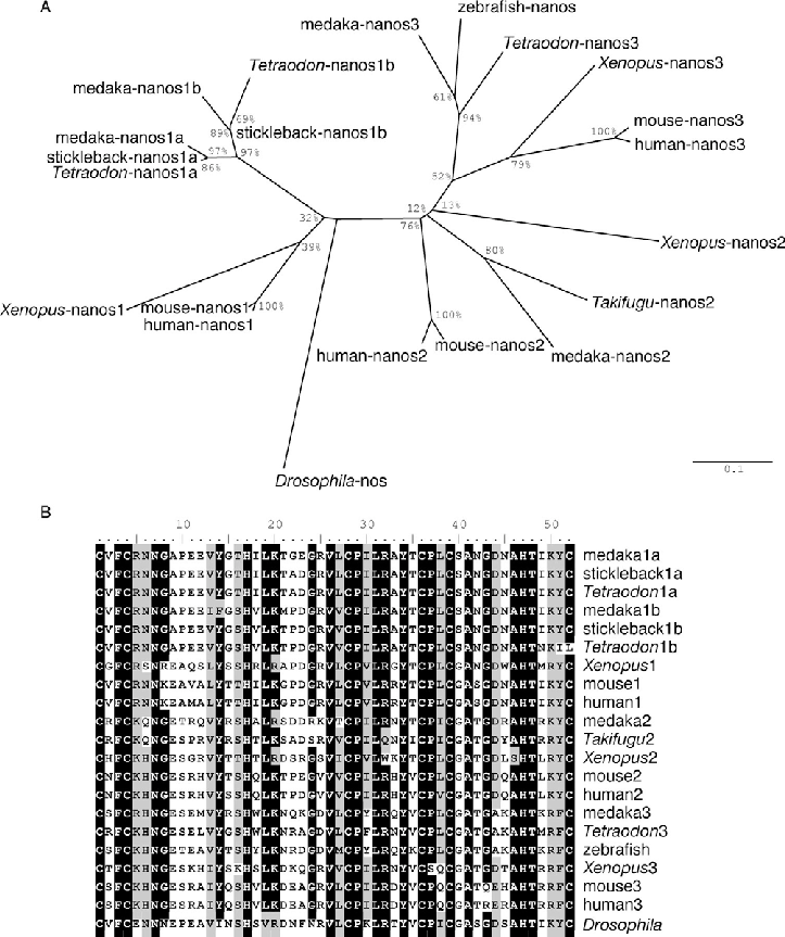 Comparison of the medaka nanos proteins with their