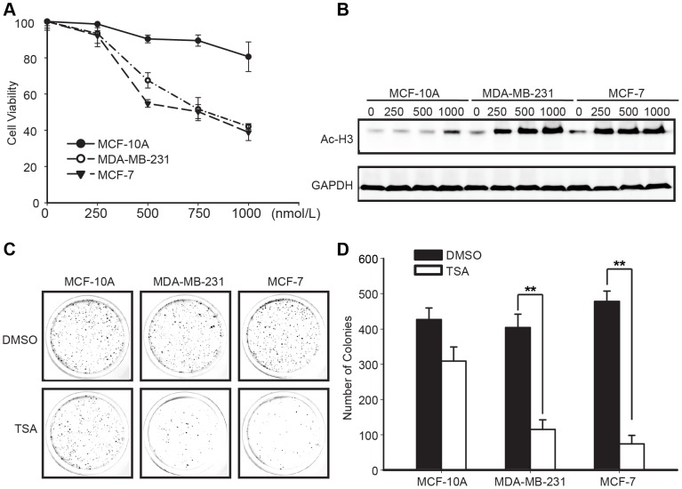 Trichostatin A Targets the Mitochondrial Respiratory Chain