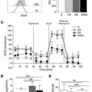 (PDF) P38 signaling inhibits mTORC1-independent autophagy