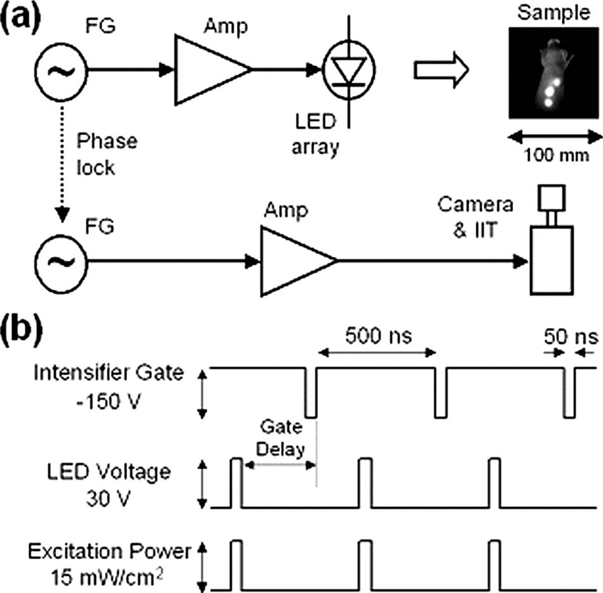 a Schematic diagram of wide-field time-gated imaging