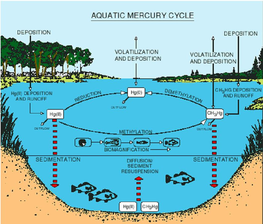 Mercury Cycle Diagram