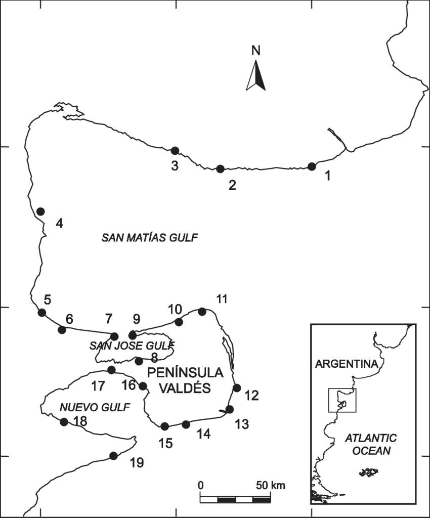 medium resolution of south american sea lion rookeries and haul out sites during the download scientific diagram