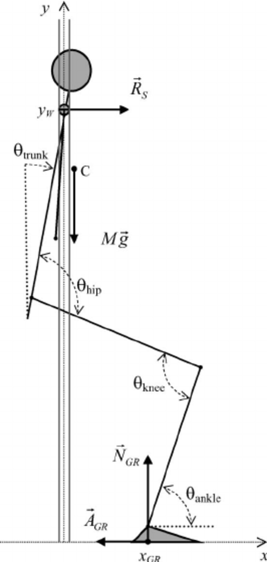 Schematic representation of the fundamental elements of