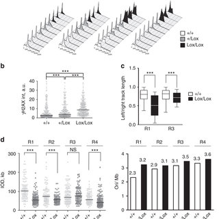 Aberrant DNA replication patterns in differentiating EBs