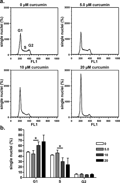 Long-term exposure to curcumin induces G1-phase arrest and