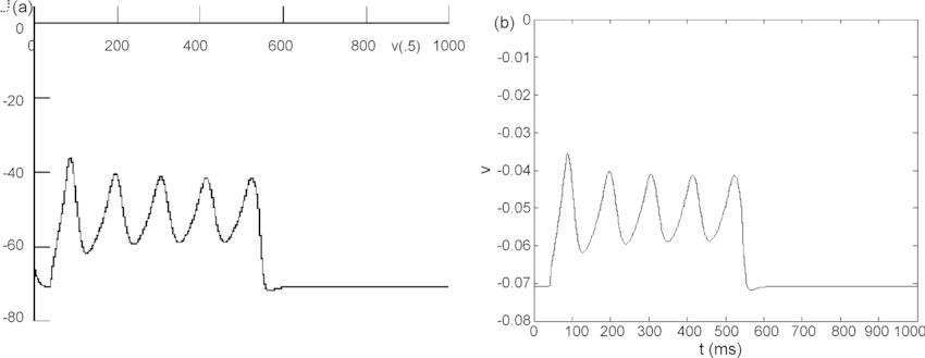 Subthreshold oscillations of the membrane potential