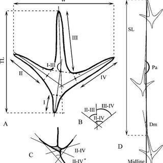 (PDF) Ichnotaxonomy of Bird-Like Footprints: An Example