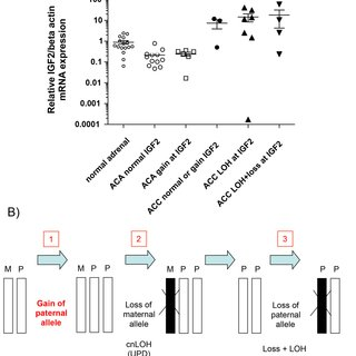 A) Relative mRNA expression levels evaluated by qRT-PCR