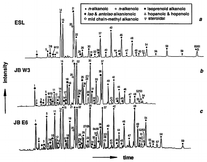 Gas chromatograms of carboxylic acid fractions (analyzed