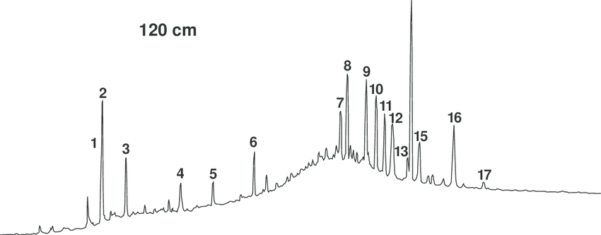 Gas chromatogram of branched and cyclic hydrocarbons from