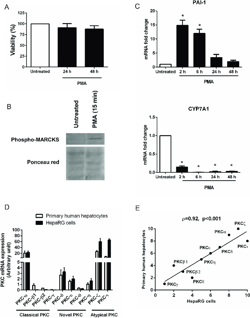 PMA-mediated activation of reference PKC targets. (A