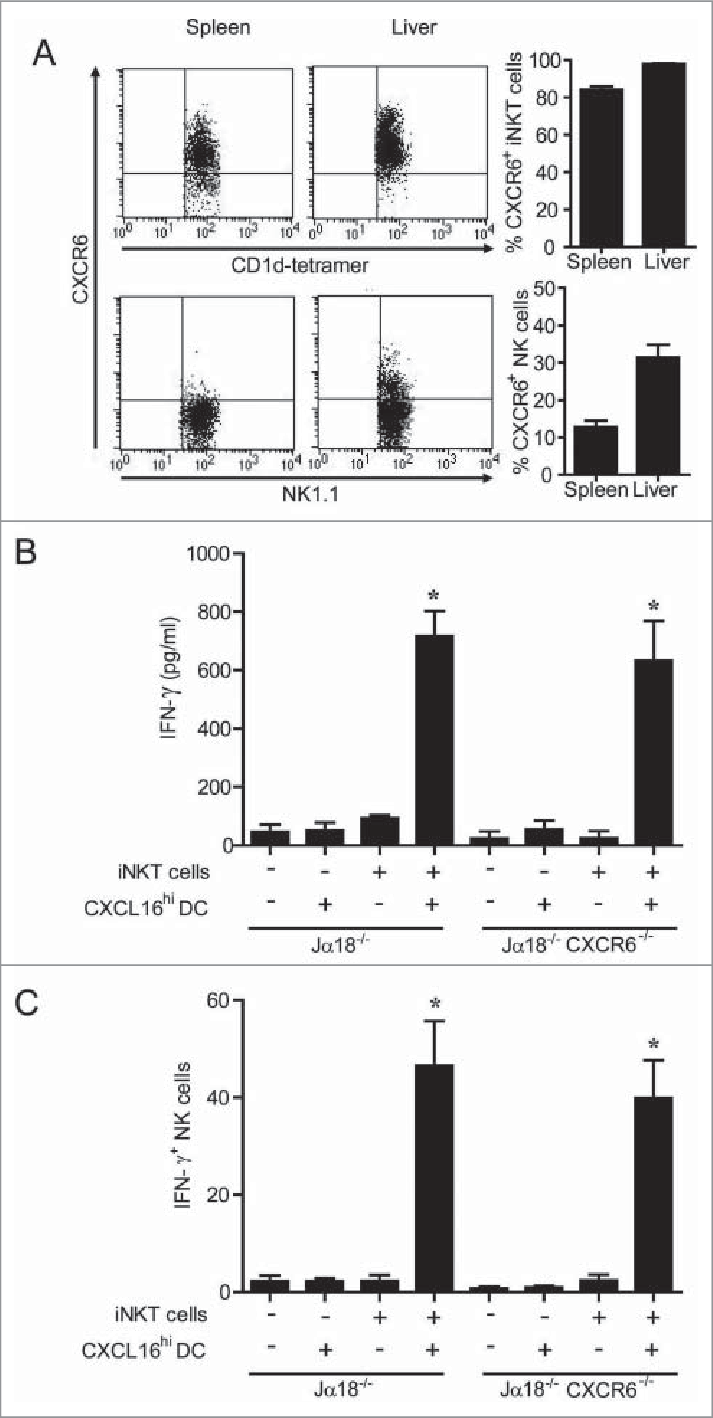 Expression and role of CXCR6 in NK cell transactivation