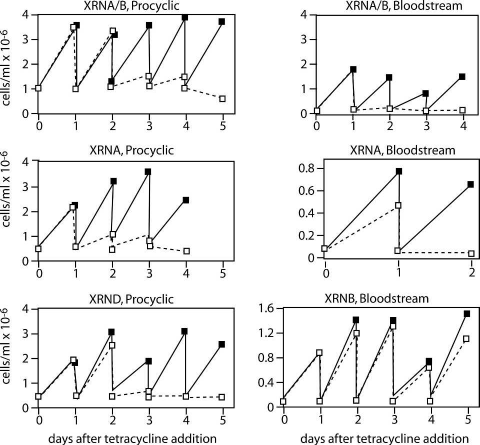 Effects of RNA interference targeting different XRN mRNAs