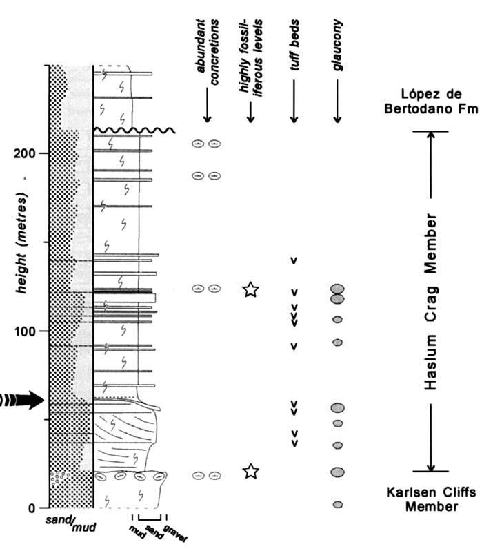 Sedimentary log through the Haslum Crag Member. Large