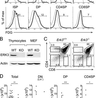 (PDF) The Catalytic Activity of the Mitogen-Activated